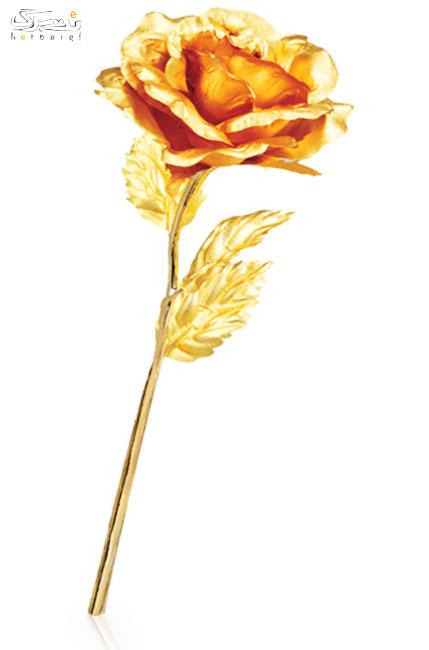 پخش عمده گل رز طلا
